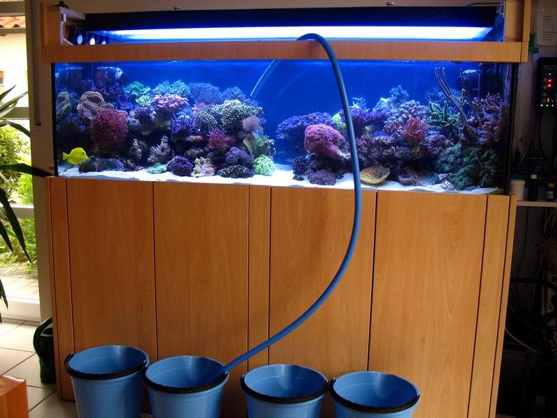 Wasserwechsel for Aquarium wasserwechsel