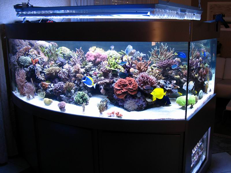 Benefits of an aquarium cube reef central online community for Cube saltwater fish tank
